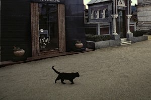 Black cat, don't cross its path unless you want bad luck